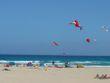 Kite Festival in November