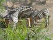 Oasis Park Zoo Fuerteventura